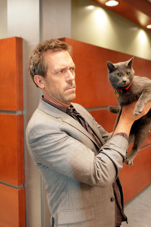 Dr House - Un chat est un chat